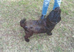 Hund1-danach