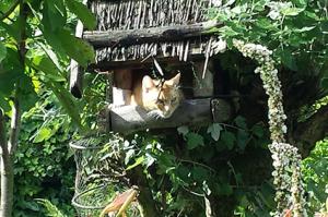 Katzenfutter-walsrode-renate-gerber